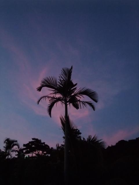 ANAのマイルで行く2泊3日沖縄旅行の写真7
