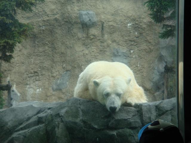旭山動物園とラベンダーの旅の写真1
