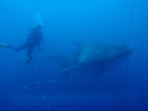 マイルを使って沖縄の友人を訪ねるの写真7