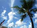 常夏グアムの写真1